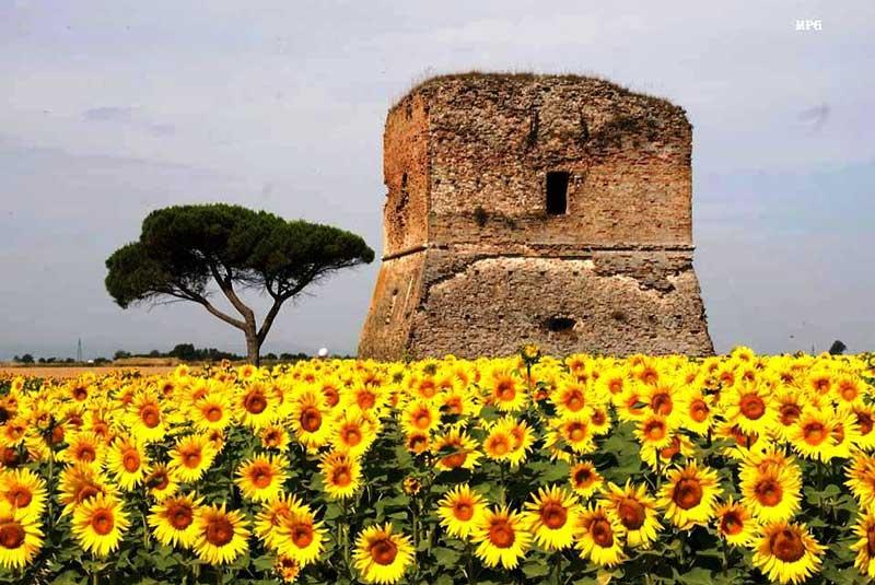 Eretta nel 1667 a sinistra della foce del canale Panphilio. Ne ebbe l'investitura la Famiglia Cavalli che la tenne fino al 1738 quando, aperto il nuovo porto con il canale Corsini, vi trasferirono i loro diritti feudali.